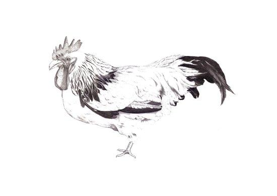 Sussex Bantam Chicken Art Print