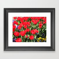 Tulip Field Framed Art Print