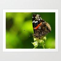 Butteryfly Art Print