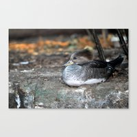 Sleepy Eyes Canvas Print
