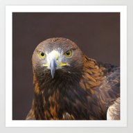 Art Print featuring Eagle20141002 by Jamfoto