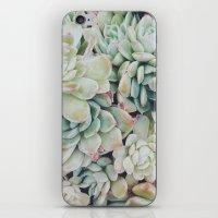 Primrose Green iPhone & iPod Skin