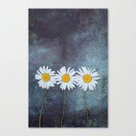 Three Marguerites Canvas Print