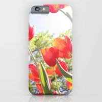 iPhone & iPod Case featuring Tiptoe Through The Tulips by ginaphoto