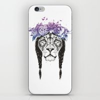 King of lions iPhone & iPod Skin