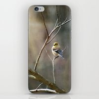Morning Goldfinch iPhone & iPod Skin