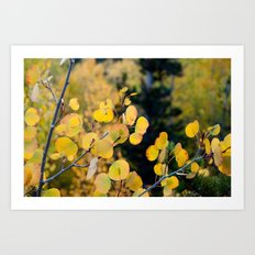 Golden Aspen Art Print