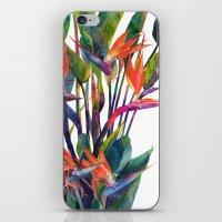 The bird of paradise iPhone & iPod Skin