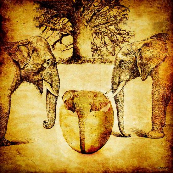 Birth of elephant Art Print
