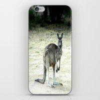 Big Grey iPhone & iPod Skin