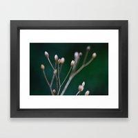 Grass Seeds Framed Art Print