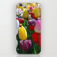 Colorful Springtime Tulips in the Netherlands iPhone & iPod Skin