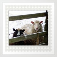 Sheep In Snow Art Print