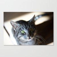 curious cat Canvas Print