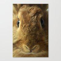 Little Rabbit. Canvas Print
