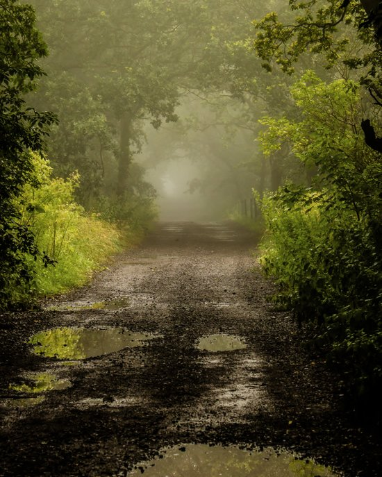Misty Woodland Lane II Art Print