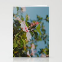 Soft Pink Hibiscus Stationery Cards