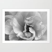 petals in black and white Art Print