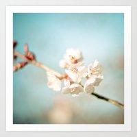 Pink Spring Cherry Blossoms  Art Print