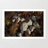 Oak leaves and stones Art Print
