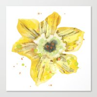 Daffodils, flowers, flower paintings, flower cushions, spring, easter, daffodil watercolors Canvas Print