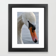 Swan portrait 2 Framed Art Print