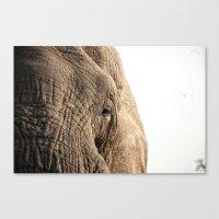 Elephant, into the wild.  Canvas Print