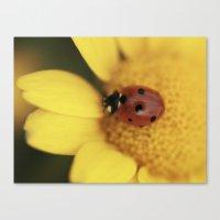 Ladybug on yellow flower - macro still life - fine art photo for interior decor Canvas Print