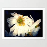 Anemone In The Darkness Art Print