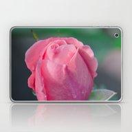 The Rosebud Laptop & iPad Skin