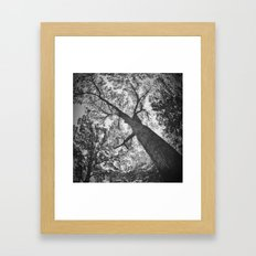 Tree II Framed Art Print