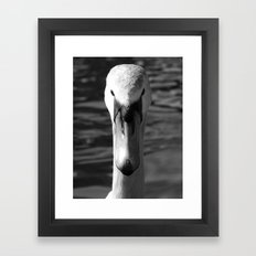 Swan Portrait 5 Framed Art Print