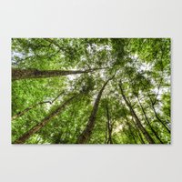 Nature Reaching For The Sky Canvas Print