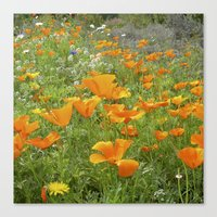 california poppy VIII Canvas Print