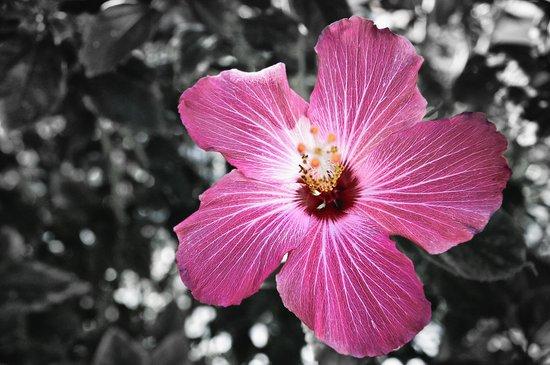 Color my Garden Pink Art Print