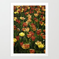 A sea of spring tulips Art Print