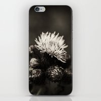 Thistle iPhone & iPod Skin