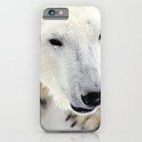 polar bear iPhone & iPod Cases featuring Polar Bear by MVision Photography