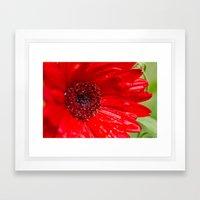 Red Gerber Daisy Framed Art Print