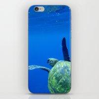 Turtle Of The Sea iPhone & iPod Skin