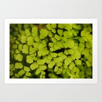 Maidenhair Fern Art Print