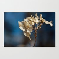 Summer's Ghost II Canvas Print