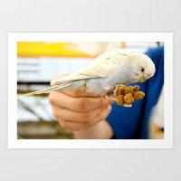 Blue Parakeet Art Print