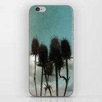 Prickly Teasels  iPhone & iPod Skin