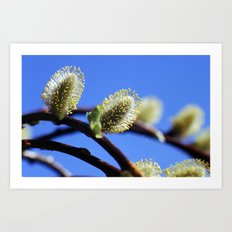 Willow Catkins Art Print