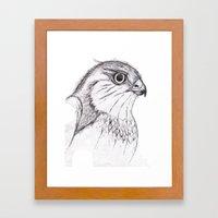 Aguila Framed Art Print
