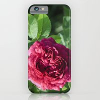 Red Rose iPhone 6 Slim Case