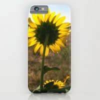 Light through the Sunflower iPhone 6 Slim Case