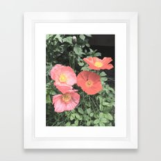 Papaveraceae Framed Art Print