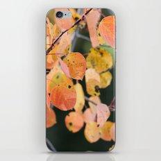 aspen leaves. iPhone & iPod Skin